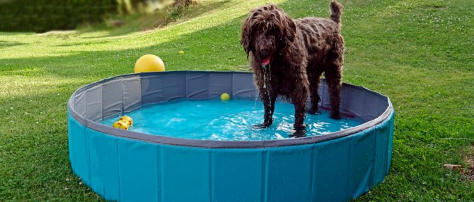 Above Ground Pools For Dogs
